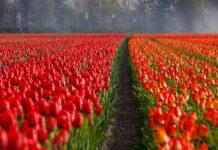 Jak dokonać rozliczenia podatku z Holandii